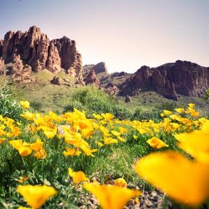 spring_desert_sm